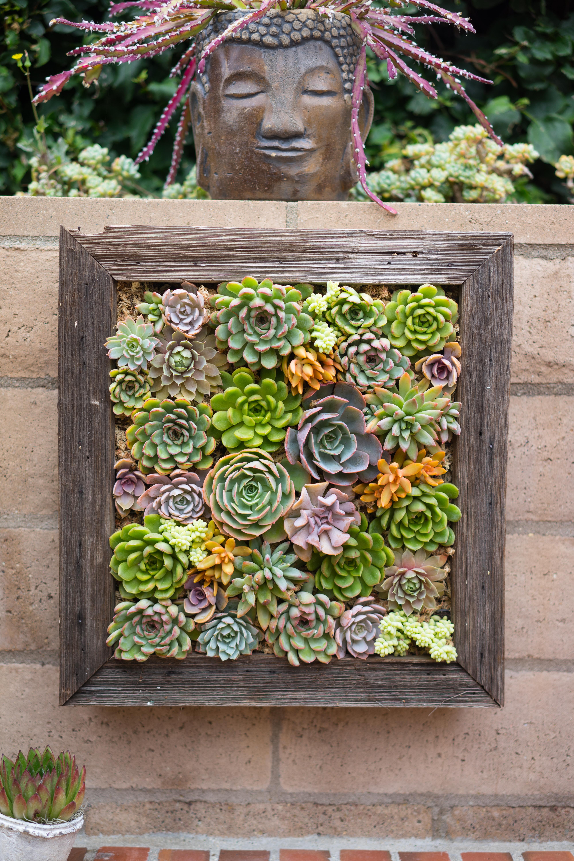 13 Outdoor Succulent Wall Garden Ideas Dalla Vita